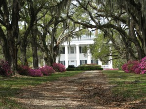 An Old Plantation