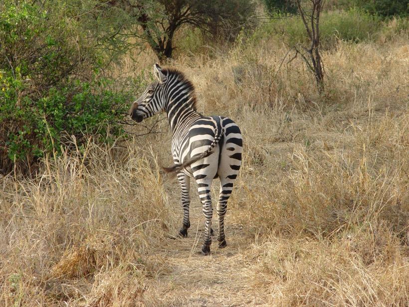 africa2004-025
