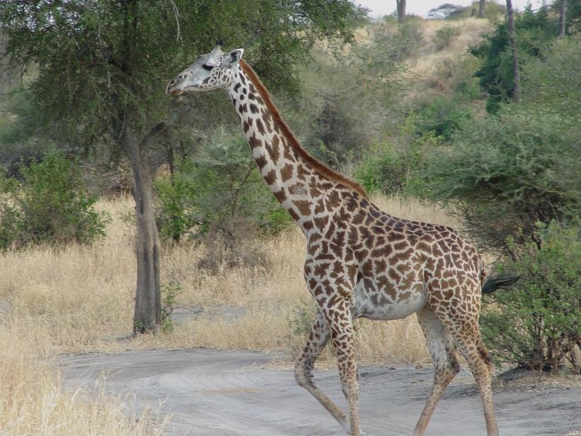 africa2004-034